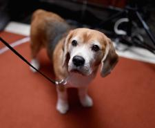 28 dogs have received the PDSA Dickin Award since it began in 1943 (Photo by Jamie McCarthy/Getty Images)