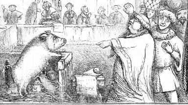 Illustration from Chambers Book of Days depicting a sow on trial